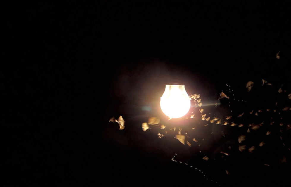 02 Licht Ins Dunkel - Jasper Diekamp X