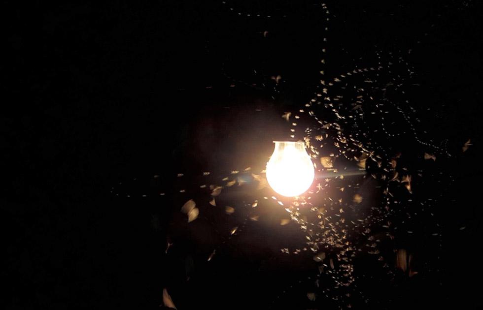 03 Licht Ins Dunkel - Jasper Diekamp