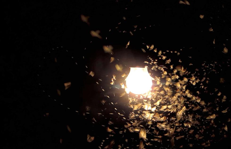 04 Licht Ins Dunkel - Jasper Diekamp