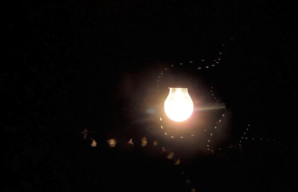 08 Licht Ins Dunkel - Jasper Diekamp