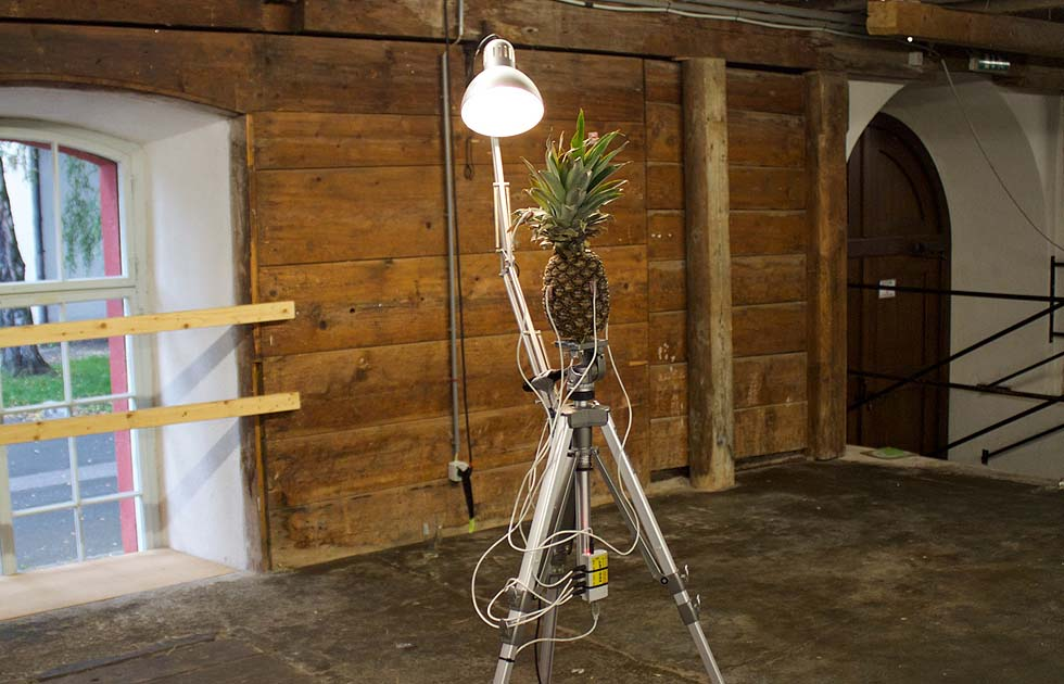 02 Pineapple Dreams - Jasper Diekamp